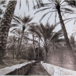 kd8-10-falaj-dhs-gelatine-photograph-30x30-cms