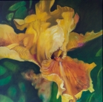 LJV 2-14 Yellow iris Oil on Canvas 96x96Cms Dhs.15,000