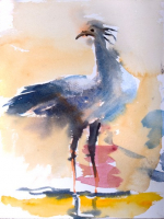 SW 39-19 Secretary bird watercolour 30x40 #220
